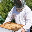 Beekeeper Carrying Honeycomb Frames In Crate — Stockfoto