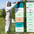 Beekeeper Using Fume Board on Hive — Stock Photo