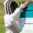 Stock Photo: Female Beekeeper Working At Apiary