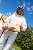 Beekeeper Holding Honeycomb Frame At Apiary — Stock Photo