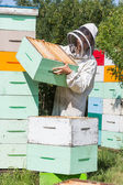 Beekeeper Carrying Honeycomb Crate At Apiary — Stock Photo
