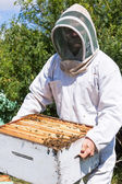 Beekeeper Carrying Honeycomb Frames In Crate — Stock Photo
