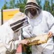Stock Photo: Beekeepers Inspecting Honeycomb Frame