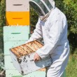 Stock Photo: Male Beekeeper Carrying Honeycomb Crate
