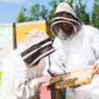 Stock Photo: Beekeepers Inspecting Honeycomb Frame At Apiary