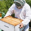 Stock Photo: Beekeeper Carrying Honeycomb Crate At Apiary