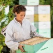 Stock Photo: Female Beekeeper In Apiary
