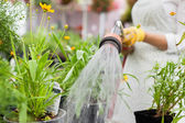 Midsection Of Florist Watering Flower Pots — Stock Photo