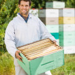 Stock Photo: Confident Beekeeper Carrying Honeycomb Crate