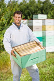 Confident Beekeeper Carrying Honeycomb Crate — Stock Photo