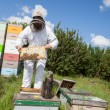 Beekeeper Holding Honeycomb Frame On Farm — Stock Photo #36045451
