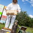 Stock Photo: Beekeeper Holding Honeycomb Frame On Farm