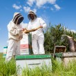 Stock Photo: Beekeepers Examining Honeycomb At Apiary
