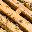 Foto de Stock  : Wooden Honeycomb Frames With Bees