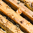 Wooden Honeycomb Frames With Bees — Stok fotoğraf