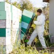 Beekeeper Loading Stacked Honeycomb Crates In Truck — Foto de Stock