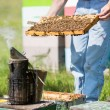 Beekeeper Smoking Beehive — Stock Photo #36046595