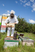 Beekeeper Holding Honeycomb Frame On Farm — Stock Photo