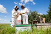 Beekeepers Examining Honeycomb At Apiary — Stock Photo