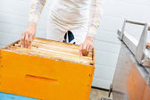 Beekeeper Arranging Honeycomb Frames In Crate — Stock Photo