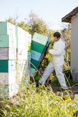 Beekeeper Loading Stacked Honeycomb Crates In Truck — Stock Photo