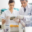 Stock Photo: Researchers Examining Chemicals