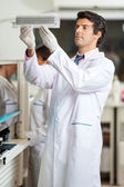Researcher Examining Samples — Stock Photo