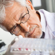 Stock Photo: Researcher Analyzing Microtiter Plate