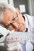 Researcher Analyzing Microtiter Plate — Stock Photo