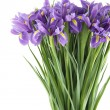 Bouquet of irises — Stock Photo #18901659