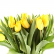 Tulips Bouquet isolated on white — ストック写真