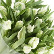Tulips Bouquet isolated on white — Stok fotoğraf