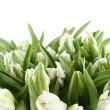 Tulips Bouquet isolated on white — Stock Photo #20132261