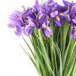 Bouquet of irises — Stock Photo #20132343