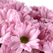 Bouquet of Chrysanthemums — Stock Photo #20133657