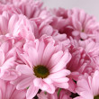 Bouquet of Chrysanthemums — Stock Photo #25207317