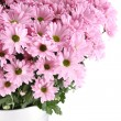 Chrysanthemums — Stock Photo #27944453