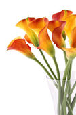 Bouquet Calla — Stock Photo