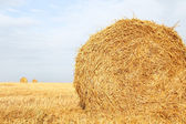 Hay Bale Scenery — Photo