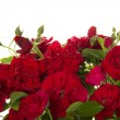 Red roses — Stock Photo #33503297