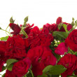 Rose rosse — Foto Stock #33503297