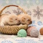 Adorable labrador retriever puppies — Stock Photo #36880761
