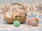 очаровательны лабрадор ретривер щенок — Стоковое фото