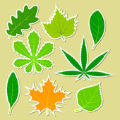 Leaves of different plants — Stock Vector