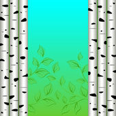 Birch background — Stock Vector
