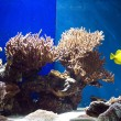 Aquarium with fish and corals - Photo
