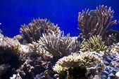 Corals — Stock Photo