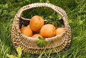 абрикосы — Стоковое фото