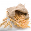 Wheat grains and ears - Stock Photo
