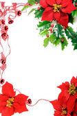 Poinsettias frame — Stockfoto